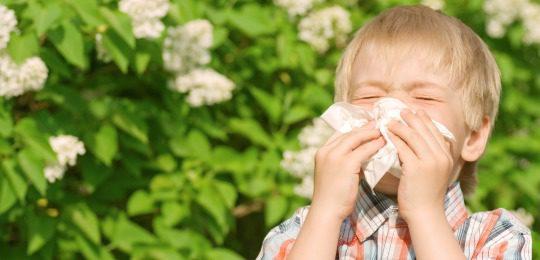alergia.jpg